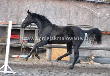 2014.05.12 Moje konie w dzień terminu