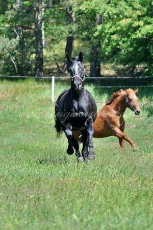 2020.06.11 11 lat hodowli Konie jak malowane