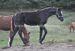 2012.10.16 Odsadzanie Starling