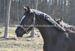 2013.04.14 Rok Starling